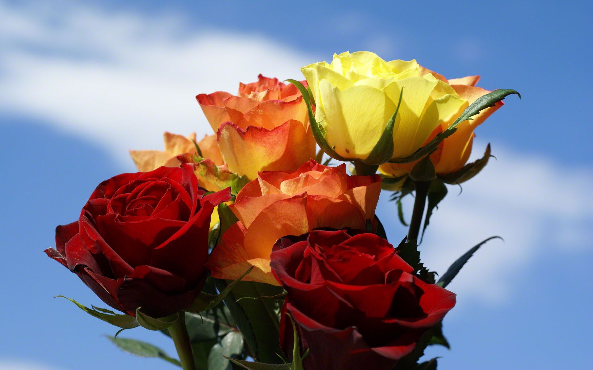 Roses high yellow red world orange bouquet resolution roses are beautiful flowers and they arent always red there are over 100 different species in all colors wallpapers with pink blue white yellow roses dhlflorist Gallery