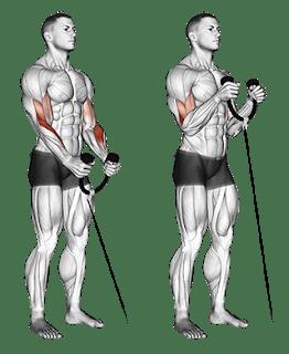 Cómo construir bíceps más grandes: 4 ejercicios fáciles