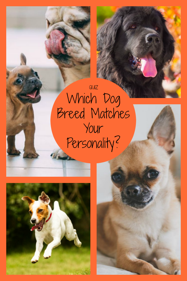 Which Dog Breed Matches Your Personality Friendly Dog Breeds Dog Breeds Little Dog Breed Quiz