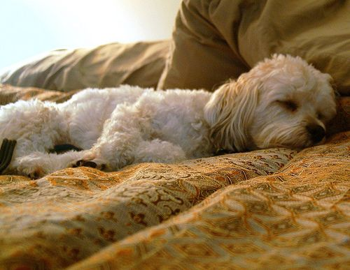 Teach Your Dog To Play Dead On Command Sleeping Dogs Love Your