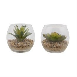 Small Artifical Succulent in Glass Plant Pot (Options Available)