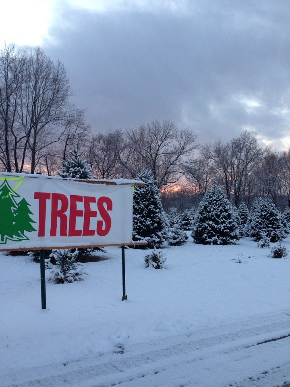 Larney Christmas Tree Farm is open from 10-5 on weekends starting ...