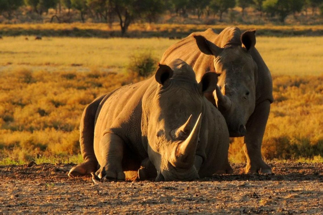 Namibia is a place unlike any other - Fall in love with this corner of Namibia as the sun rises and absorb the ambience of this beautiful wilderness ☀   #destination #namibia #windhoek #wildlife #safari #nature #wellness #fitness #rhinoceros #landscape #travel #tourism #adventure #experience #holiday #wilderness