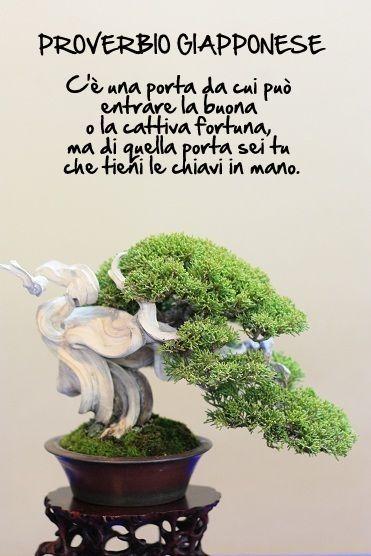 Bonsai Proverbio Giapponese Bonsai E Proverbi