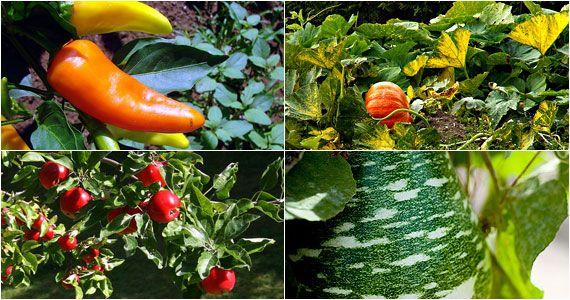 Beautiful Fruit And Vegetable Garden Nice Ideas