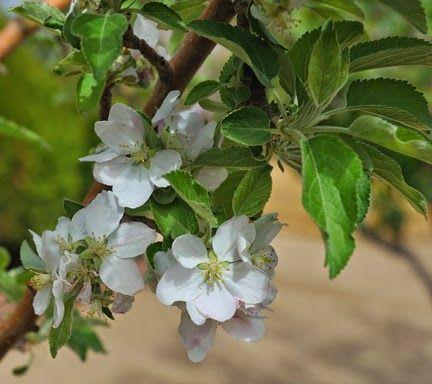 Fruit Trees In The High Desert Fruit Trees High Desert Landscaping Desert Landscaping