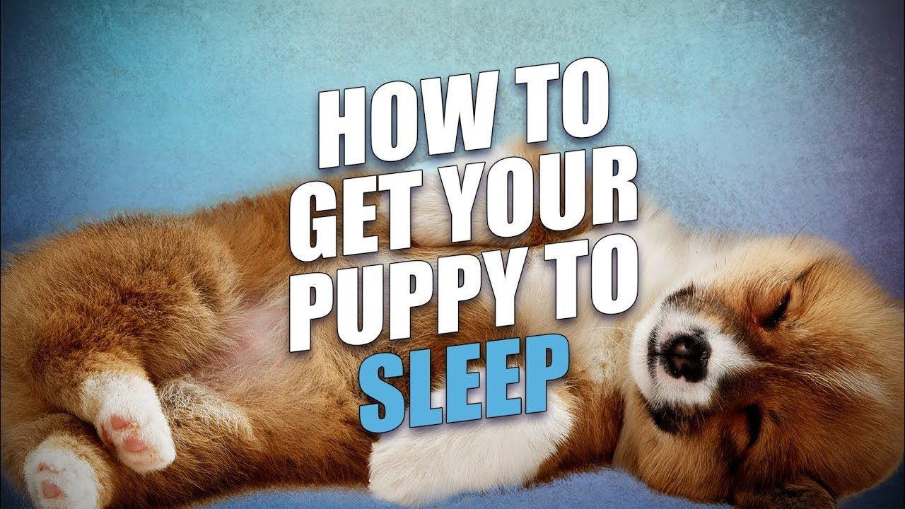 How to get a puppy to sleep through the night getting a