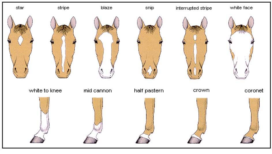C M Explanations School Organization Pinterest Horses Horse