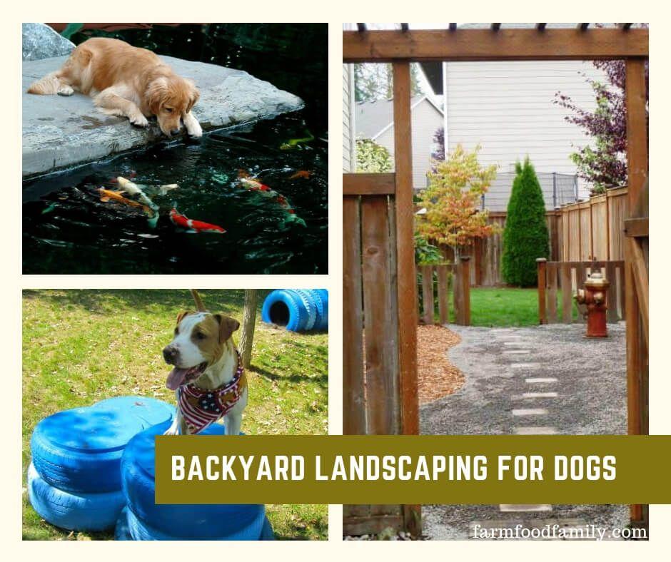 24 Great Dog Friendly Backyard Landscaping Ideas Designs For 2021 Dog Friendly Backyard Dog Backyard Dog Playground