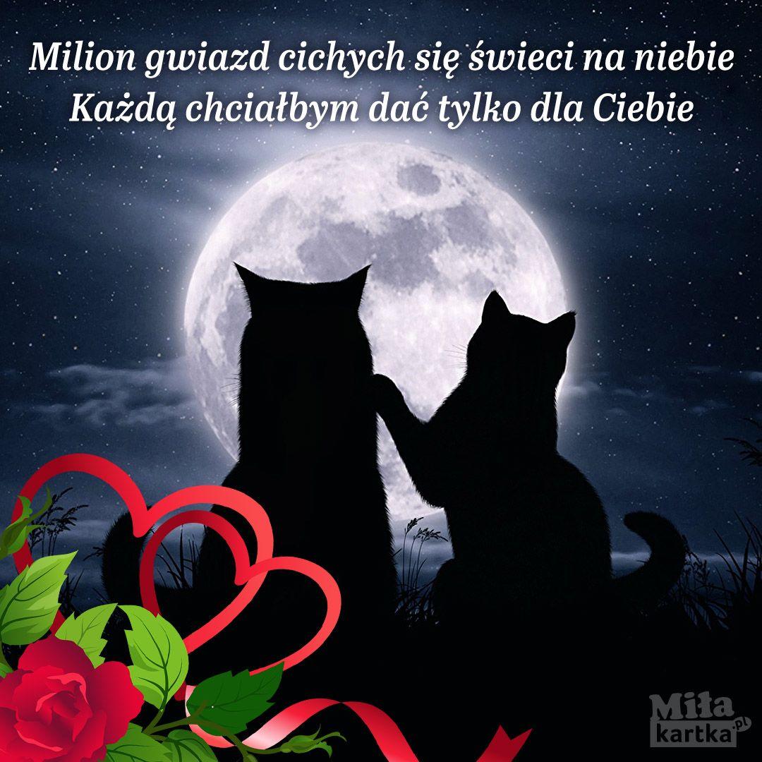 Milion Gwiazd Dla Ciebie Walentynki Polska Miłość Kochanie Koty