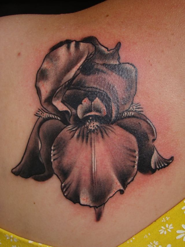 169cc6e343e92 iris germanica by scottytat2.deviantart.com on @deviantART | tattoos ...