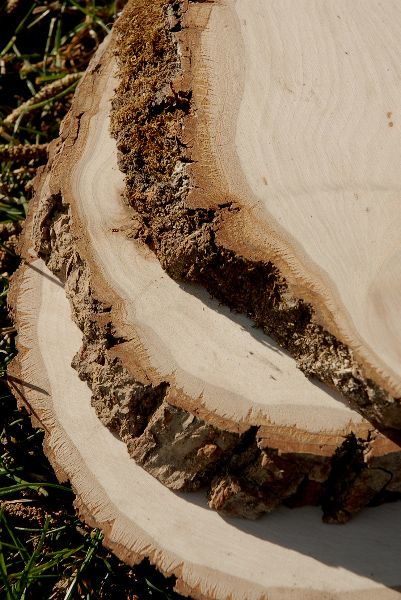Irregular Tree Slices With Bark 11in Save 36 Tree Slices Wood Tree Slice Wooden Slab Centerpiece