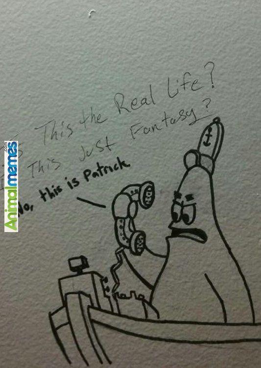 Funny Memes Bathroom Graffiti At It S Finest Funny Memes