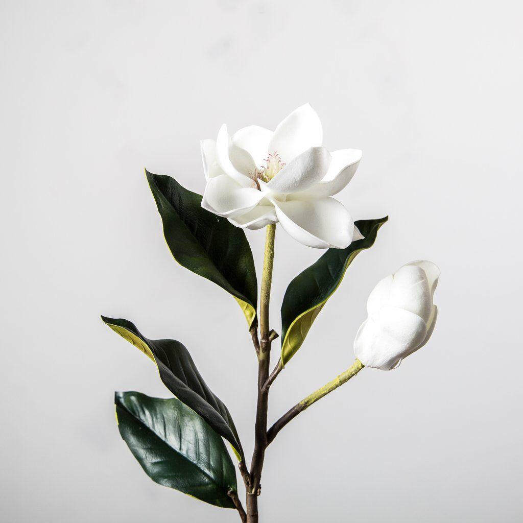 Magnolia Bud And Bloom Stem Magnolia Tattoo Bloom Magnolia Flower