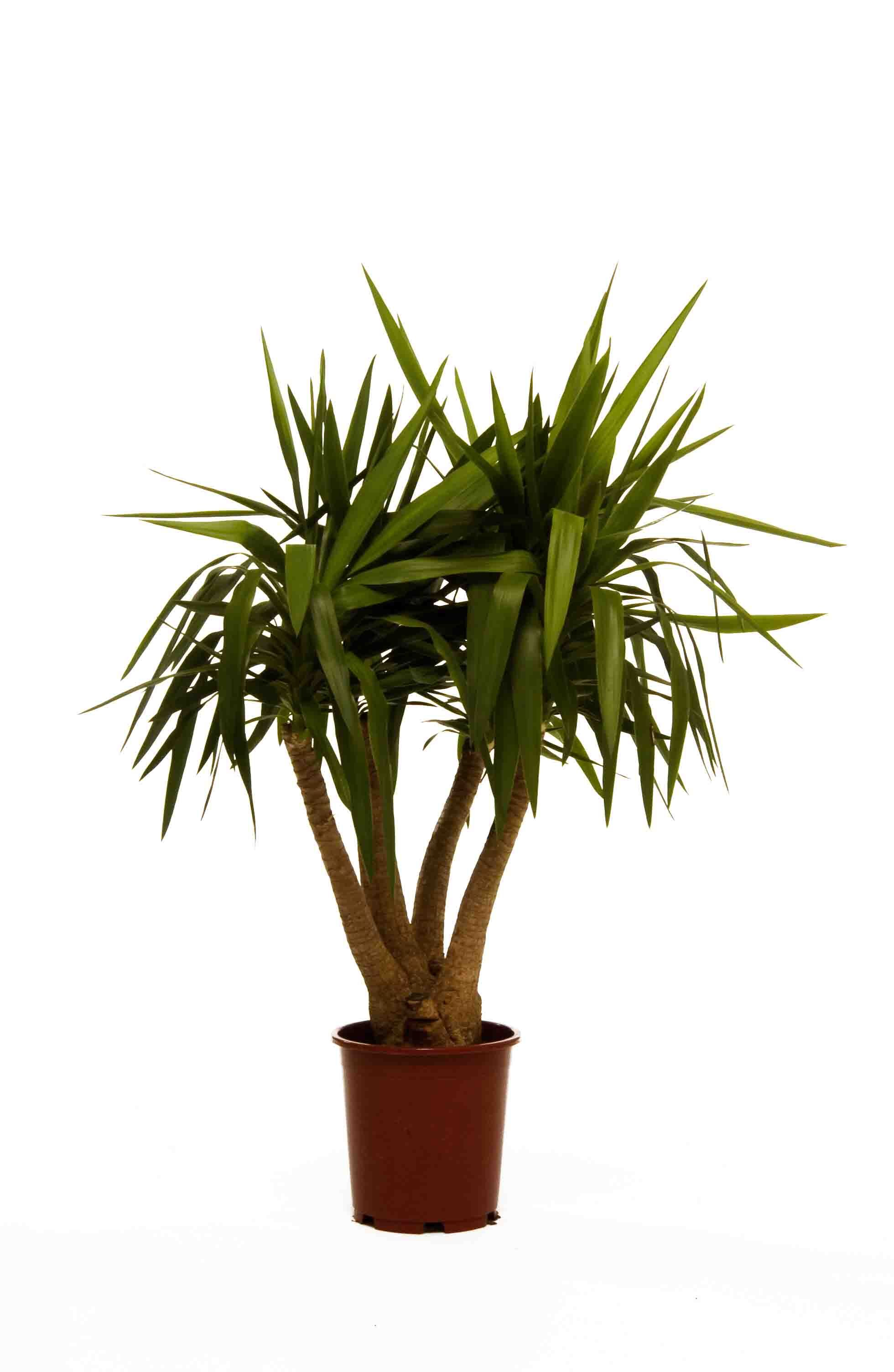 Office plants, great pot & tropical plants for your