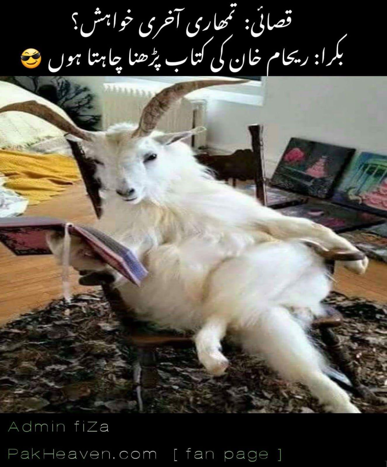 Pin By Ruby Paul On Urdu Corner Fun Quotes Funny Funny Memes Urdu Funny Poetry