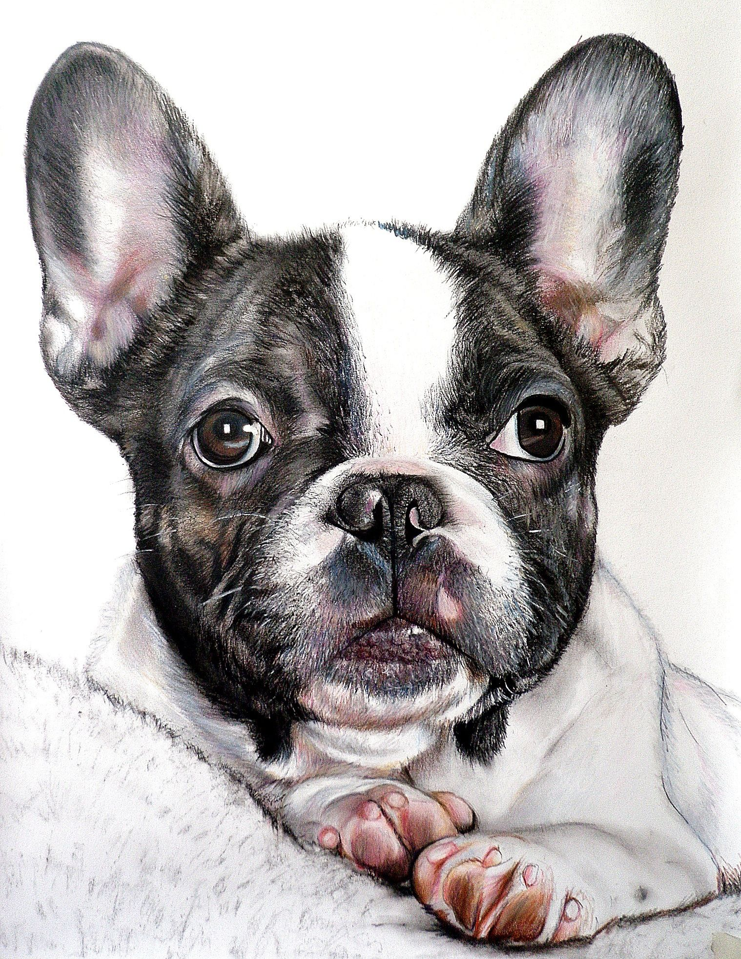 Portraits Of Dogs With Images French Bulldog Art French