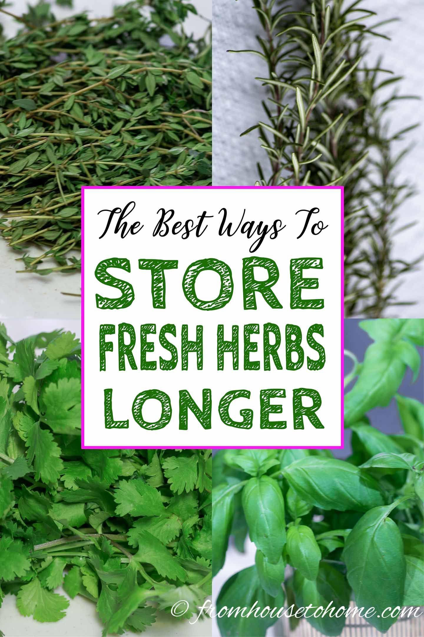 How To Store Parsley Cilantro And Other Fresh Herbs Longer Gardening From House To Home Store Fresh Herbs Preserve Fresh Herbs Cooking With Fresh Herbs