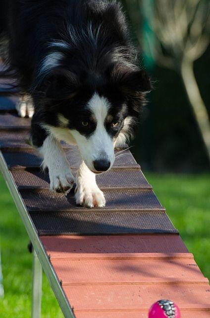 Dog Obedience Training Dog Training Dogtraining