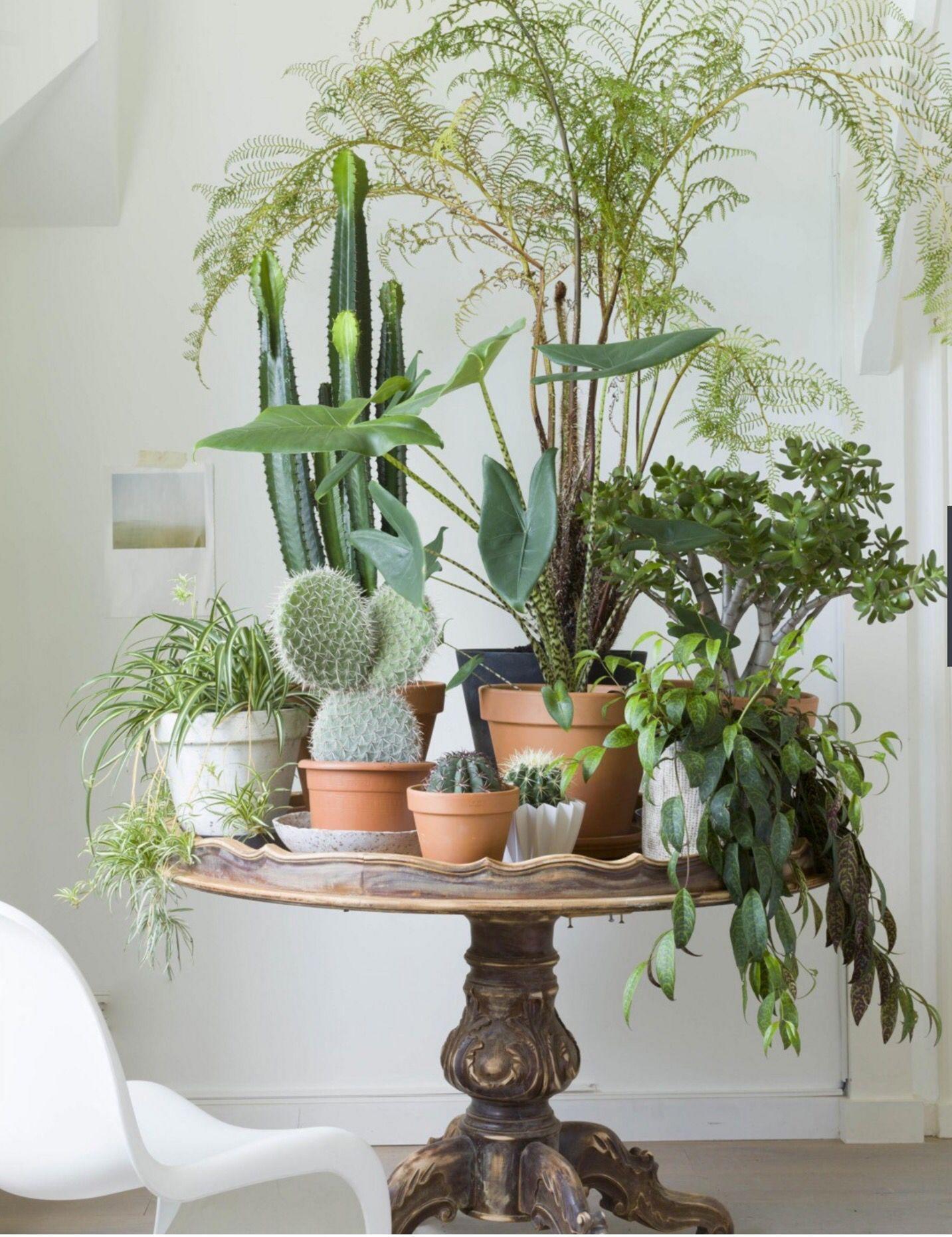 35 Indoor Garden Ideas To Green Your Home: 35+ Best Inspiring Indoor Plants Garden Ideas To Makes