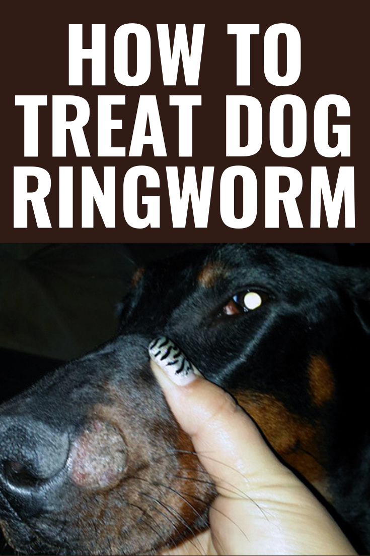 How To Treat Dog Ringworm Dog Dogs Dogslovers Doglovers Puppy