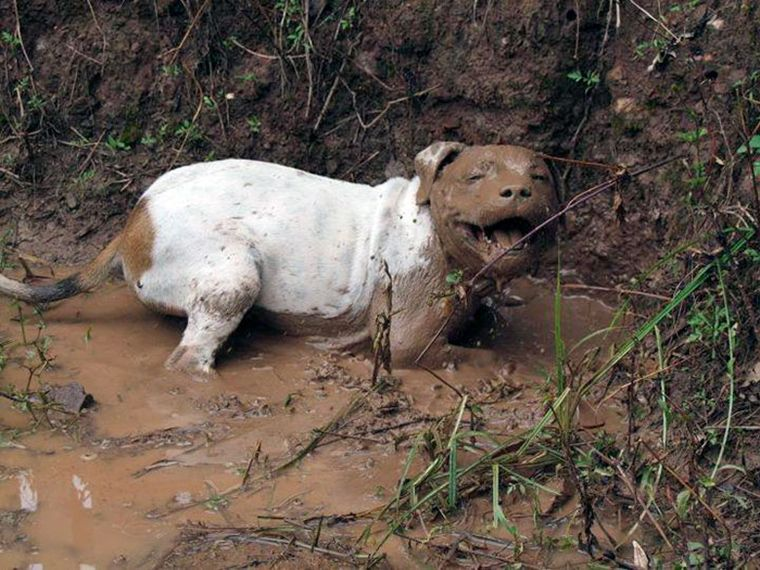 dogs-playing-in-mud