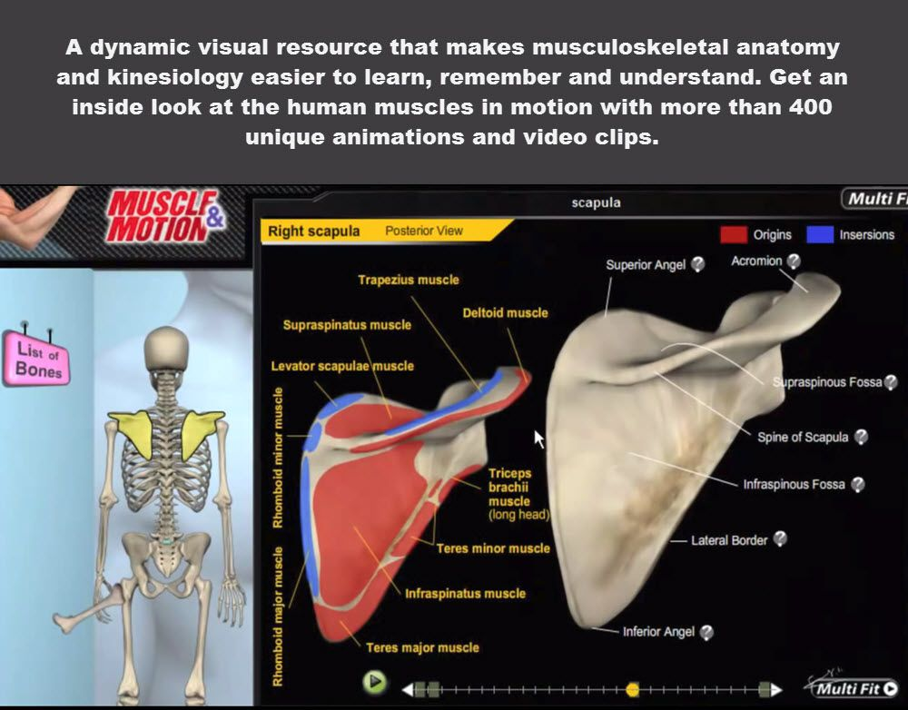 3D Anatomy of the Skeletal System allows you to view the skeletal ...