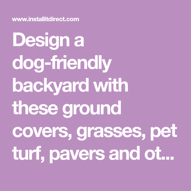 Design a dog-friendly backyard with these ground covers ...