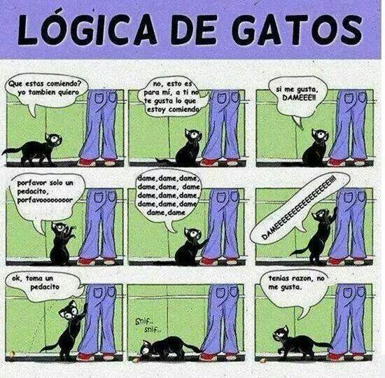 Lógica de gatos... y de Jacky.