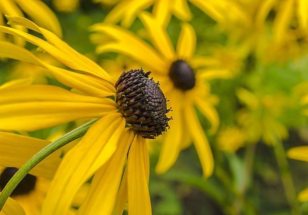 Title  Yellow Flowers  Artist  Adam Budziarek  Medium  Photograph - Photography