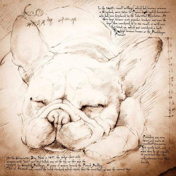 French Bulldog Sleeping Framed Giclee Print On Archival Paper