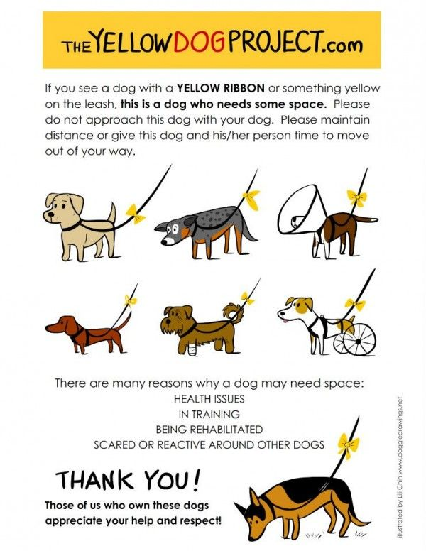 The Yellow Ribbon Project Keeping Animals Safe And Owners Alert