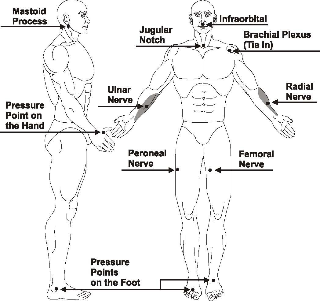 shotokan karate; diagram of fatal point of body - google search, Muscles
