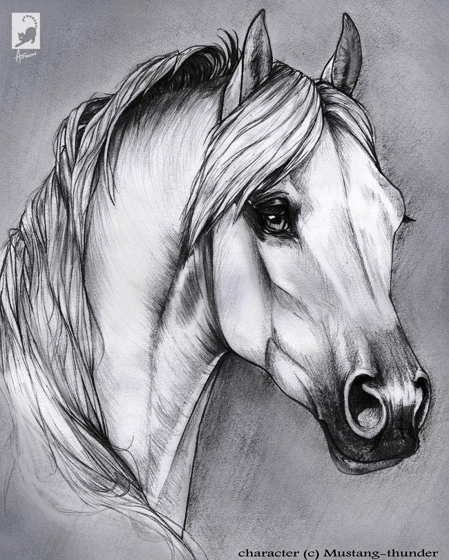 Kunst Pferde Zeichnen Pinterest