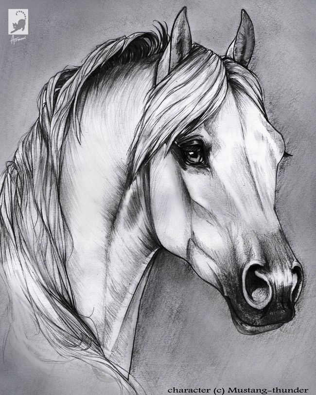 Kunst Pferde Resimler Dibujos De Caballos Caballos