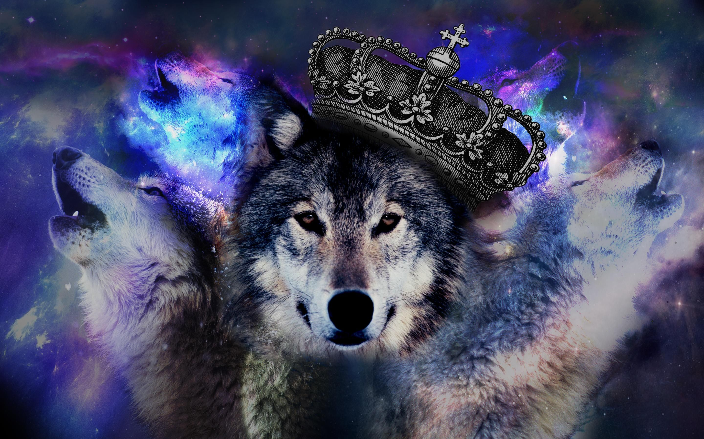 pin wallpaper cool wolf -#main