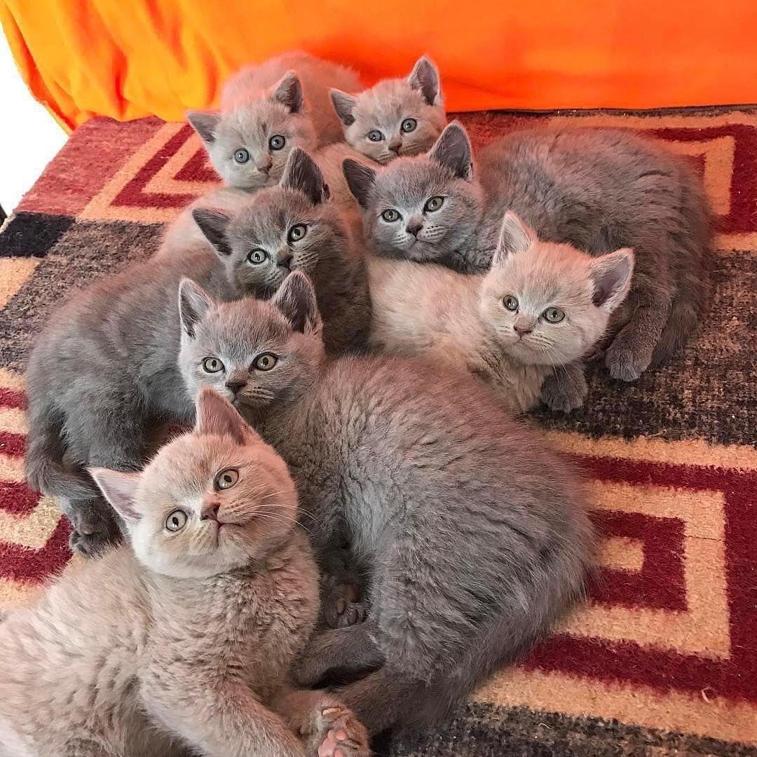 Pin By Lizzymaxx On Feline Kittens Cutest Pretty Cats