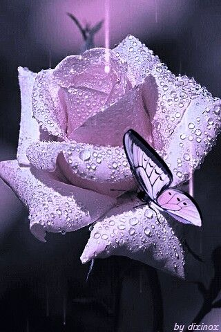 Beautiful As Combine Color As A Butterfly To A Rose With Images