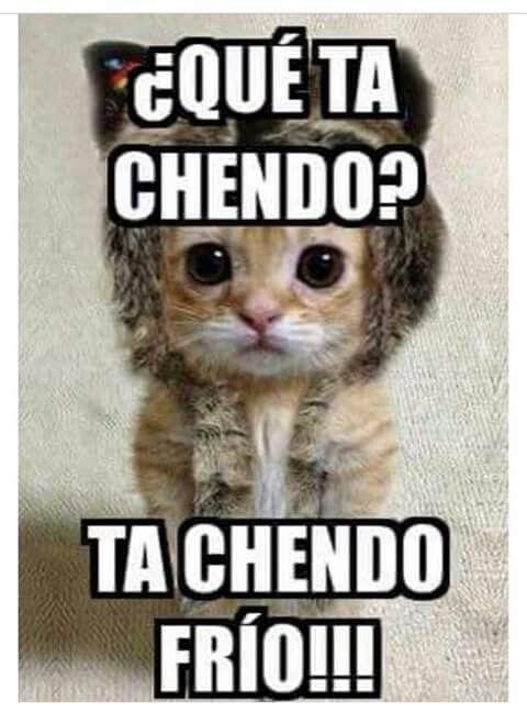 Jokes Kitty Imagenes Chistosas De Frio Memes De Frio Imagenes De Frio