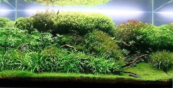 kundenaquarien aquascaping shop f r naturaquarien. Black Bedroom Furniture Sets. Home Design Ideas