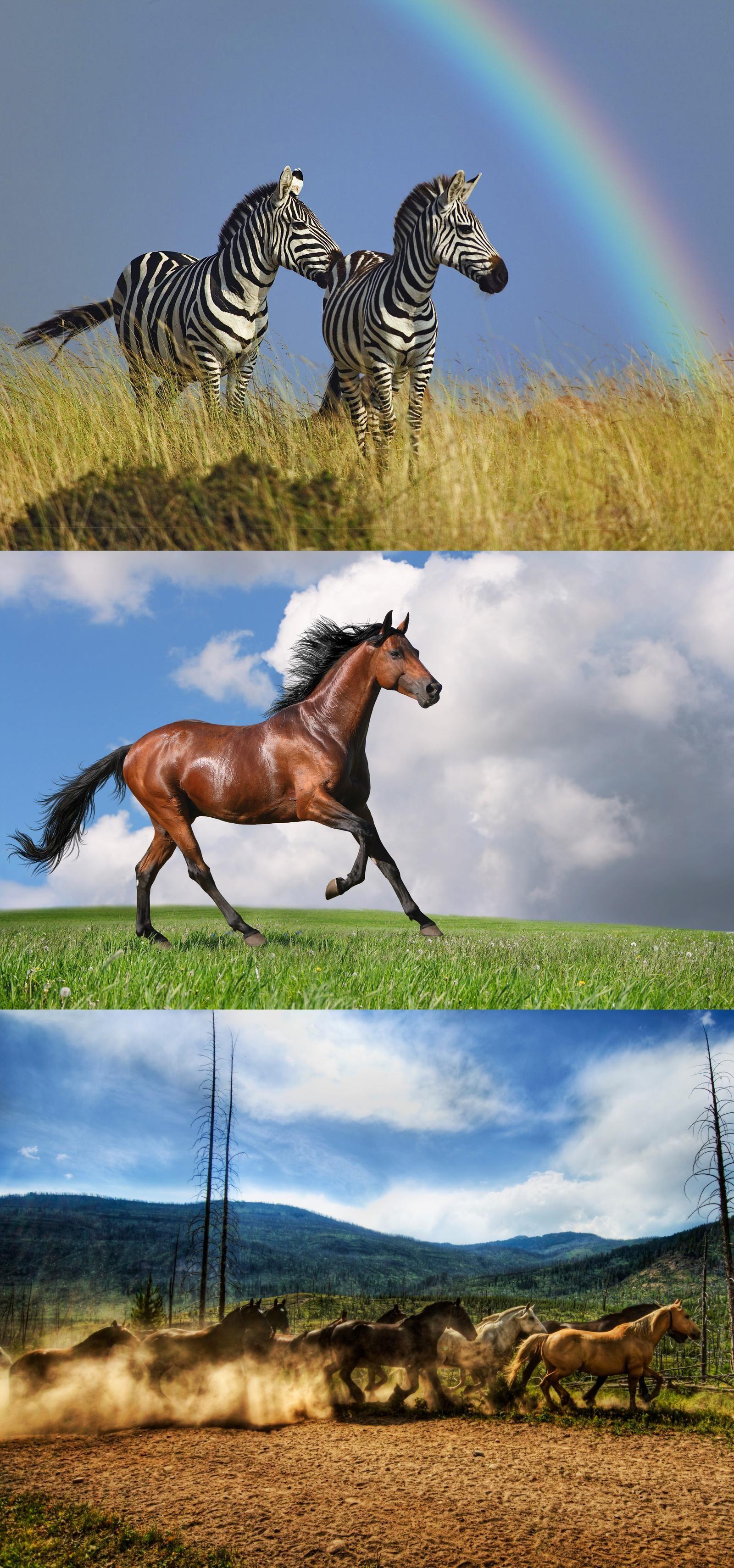 A herd of horses, horse racing