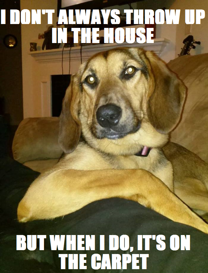 Dog Throwing Up Meme : throwing, Ladybird,, World's, Interesting, Don't, Always, Throw, House., Funny, Animals,, Cute,, Animal, Pictures