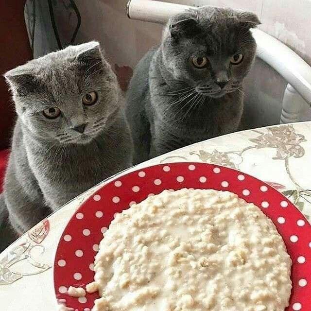 кошка ест кашу картинки