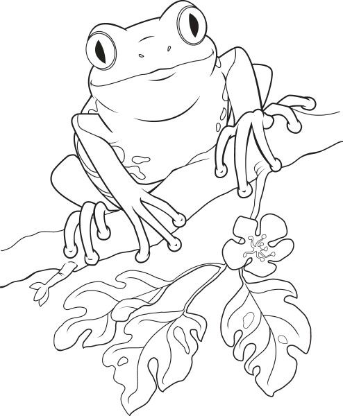 Coloring Page Frog Coloring Pages Drawings Coloring Pages