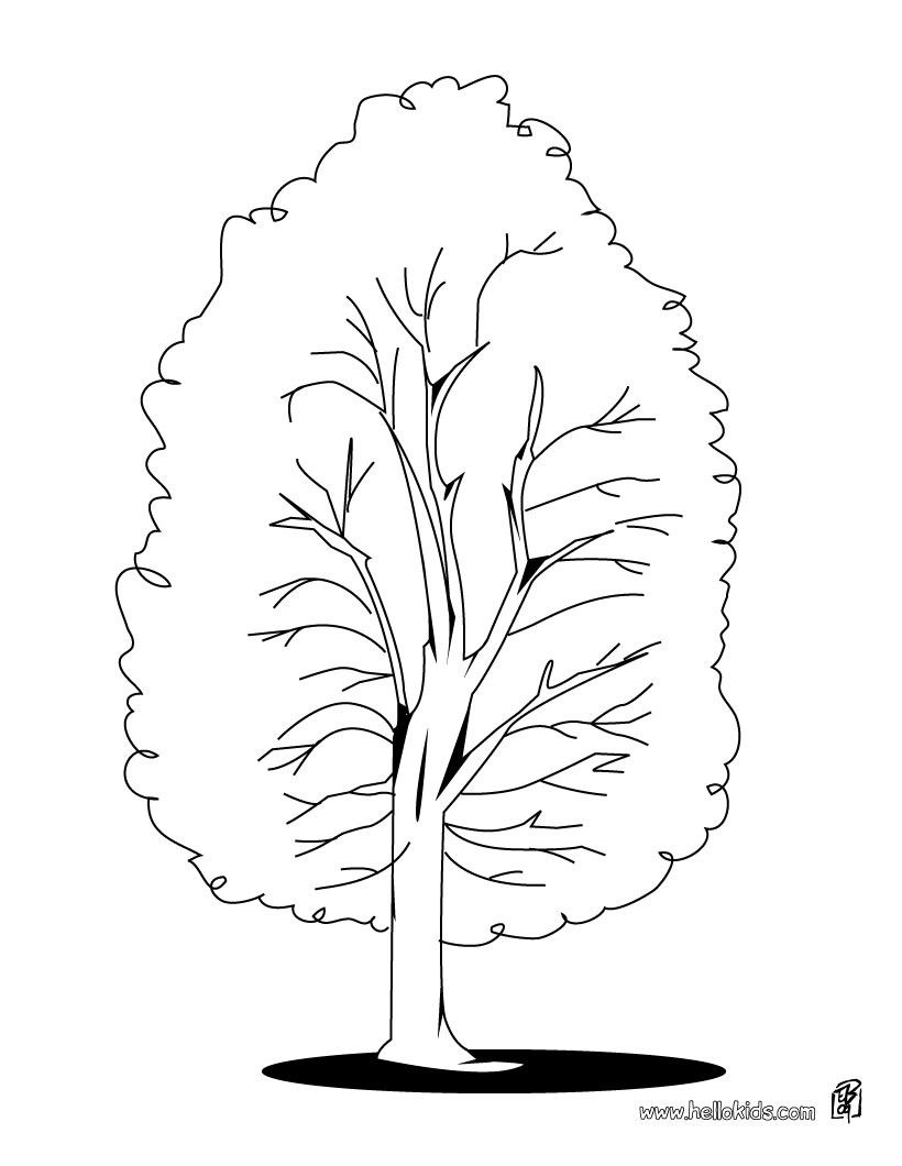poplar tree coloring page for free beautiful poplar tree coloring page for kids of all - Coloring Page Tree