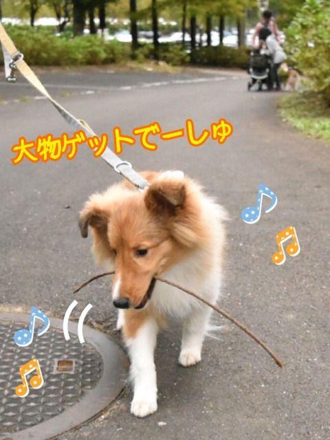 http://blog.livedoor.jp/dh_yosshy/archives/2016-11-12.html