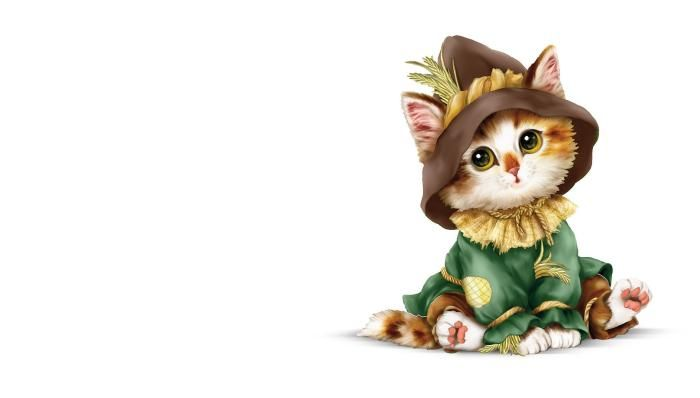 Cute cat in costume HD wallpaper download