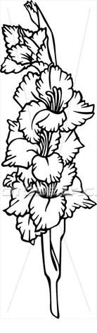 Clipart Of Flower Gladiola Gladiolus Varieties U25153793 Search Clip Art Illustration Murals Drawings Flower Drawing Sister Tattoos Gladiolas Tattoo