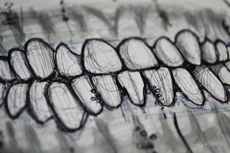 Scientific Illustration   francescapadovan: Teeth Studyby F. Padowan