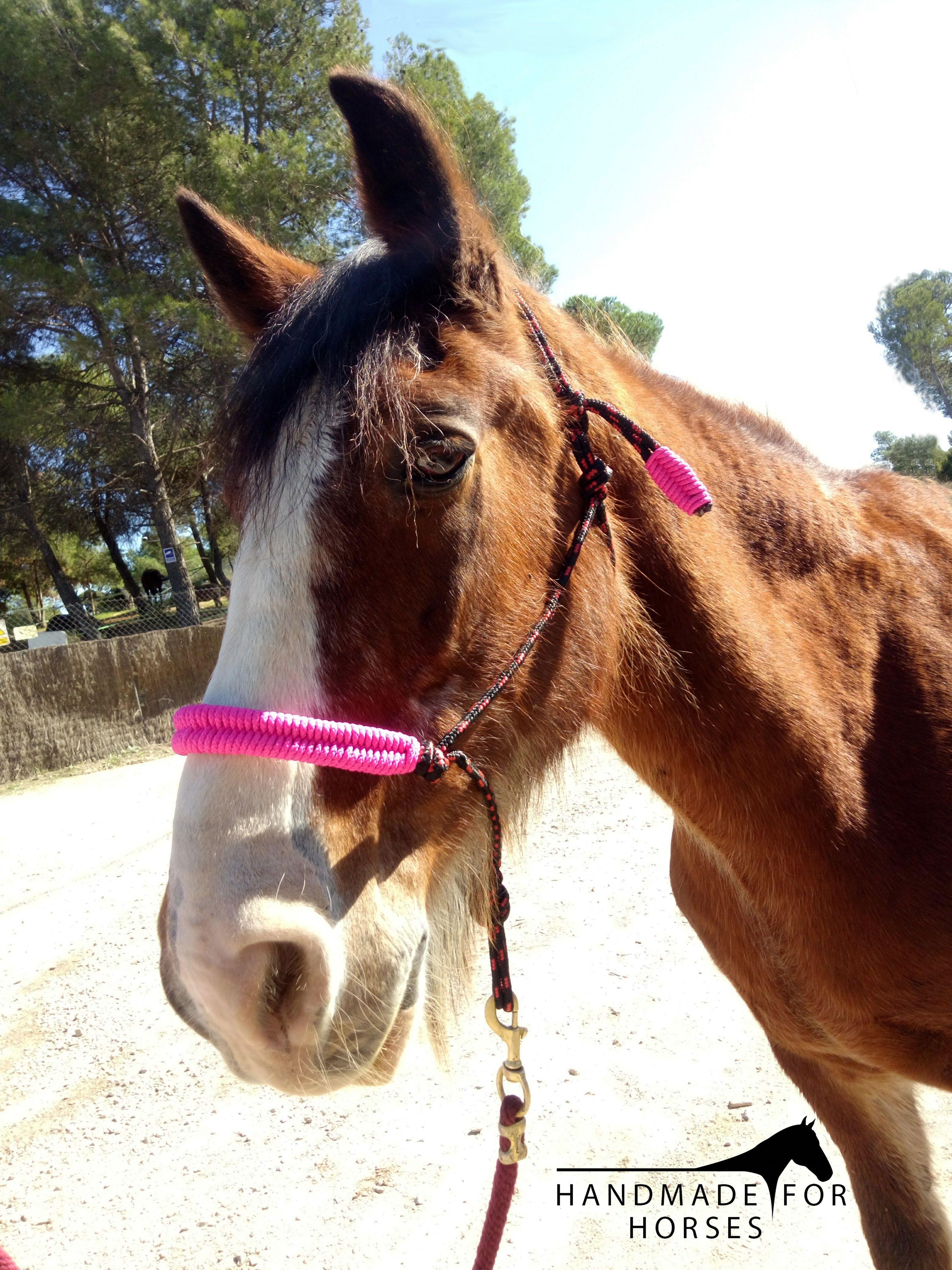 Schleich Horse Club andaluces potros//caballo nuevo /& en blíster